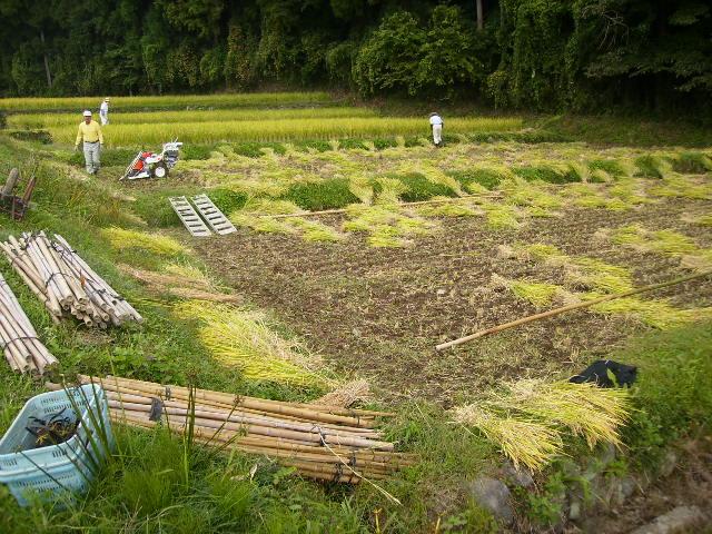 稲刈り作業28