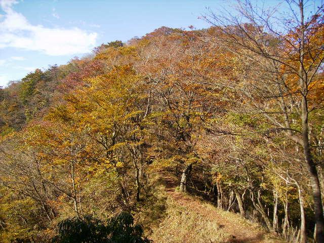 黄葉の尾根道87