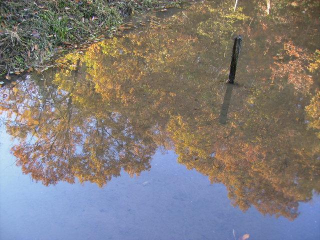 水面の黄葉12