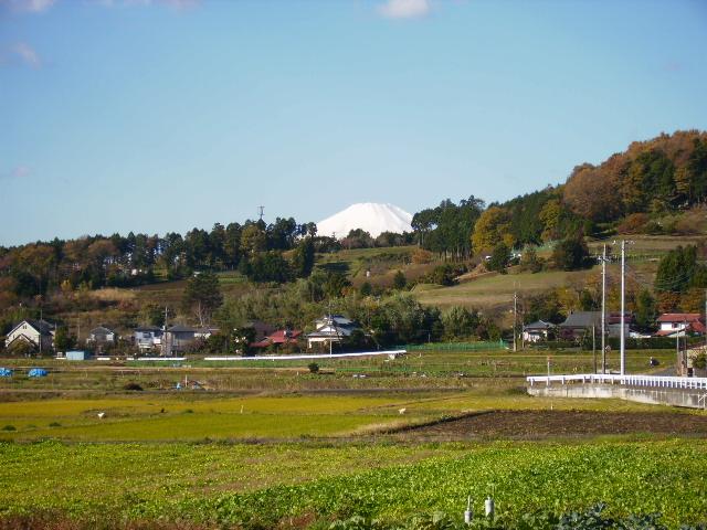 野菜畑と白富士28