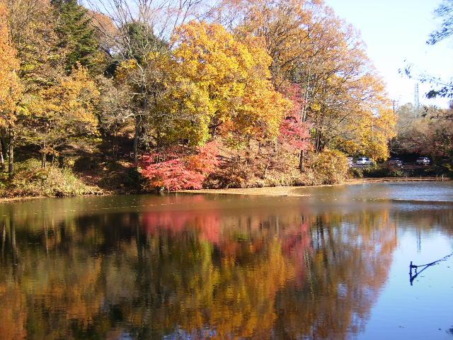 湖畔の黄葉135