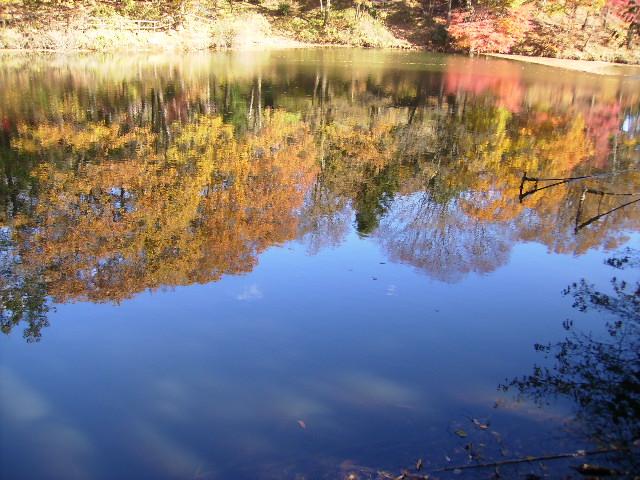 水面の黄葉138
