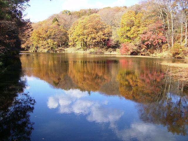 湖畔の黄葉143