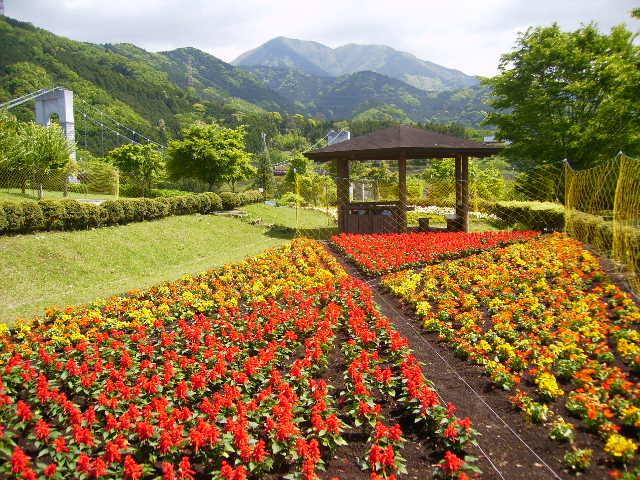 晩春の花壇127