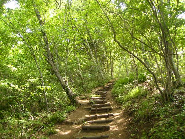 新緑の登り16