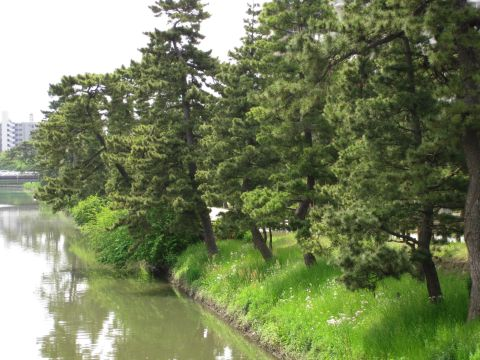 草加松原と綾瀬川
