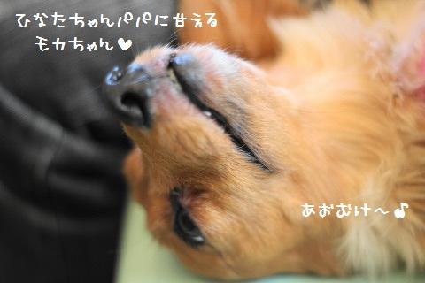 IMG_3248.jpg
