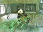 誰も見ていない放置パンダ