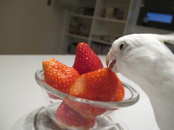 strawberrypyo4.jpg