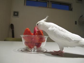 strawberrypyo5.jpg