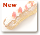 Strawberry-Eclair_over.png