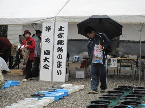 土佐錦魚の集い