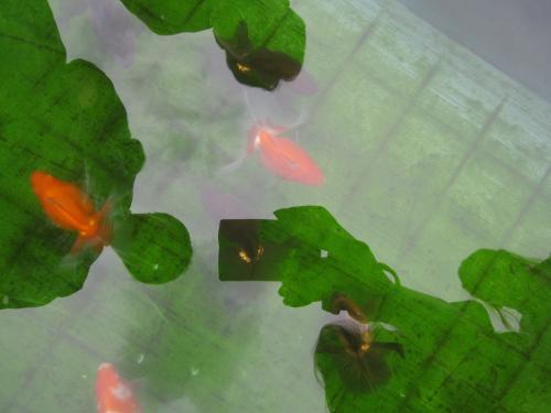 プラ舟の中に素晴らしい魚達