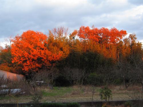 美しい夕焼けに映えた紅葉