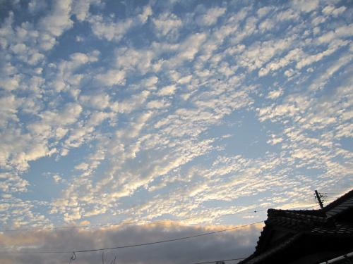 見上げた雲