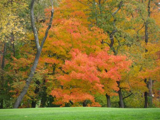 2009fall_foilage_golfcourse.jpg