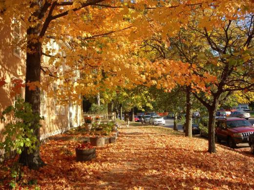 Concord_fall02.jpg