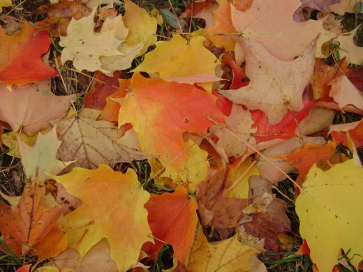 concord_leaves.jpg