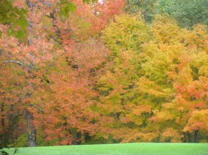 fall_foilage_golfc02.jpg