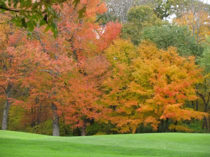 fall_foilage_golfc04.jpg
