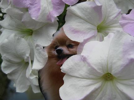 写真の周りを花に混ぜた方が良いよう