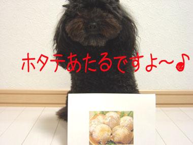 コナ・ホタテ