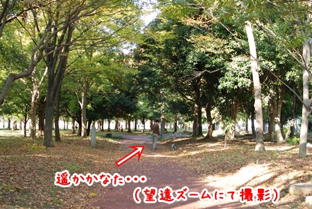 175-0911misato.jpg