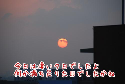 DSC_7962.jpg