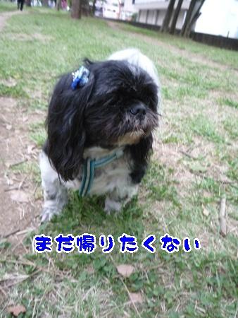 P1130961.jpg