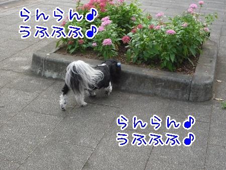 P1140032.jpg