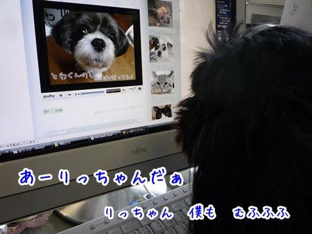 P1160469.jpg