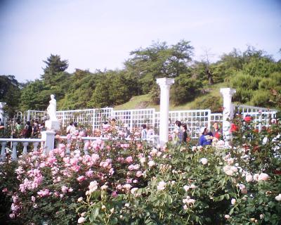 生田緑地バラ苑3:R2