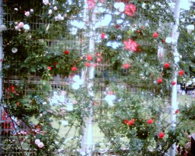 バラのある風景:Entry