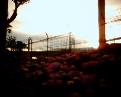 アジサイと新幹線と:Entry
