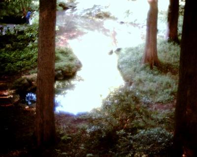 ラクウショウの森で:Entry