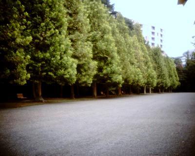 プラタナス並木:Entry