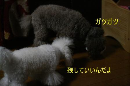 IMG_5164f.jpg