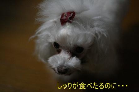 IMG_5168f.jpg