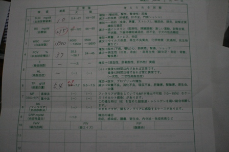 IMG_7809f.jpg