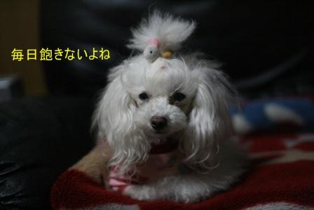 IMG_8561f.jpg