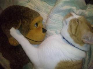 おさる枕1