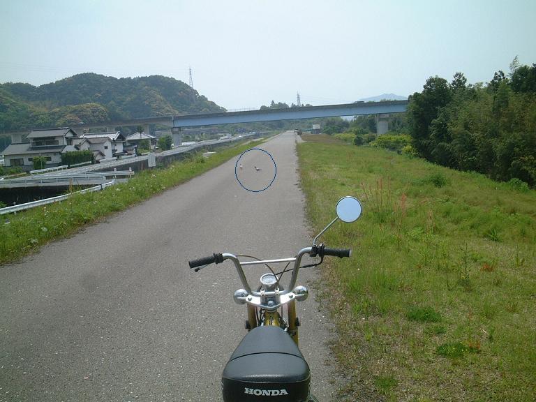 DAX70道路デビュー-1