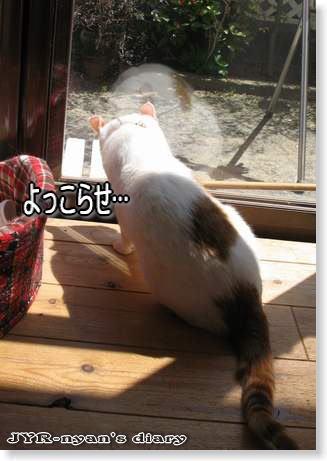 daichi110503