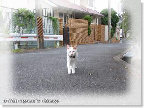 daichi110801