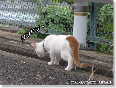 daichi1108017