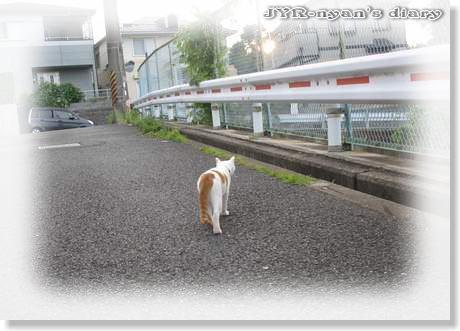 daichi1108019
