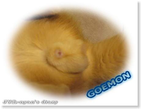 goemon110414