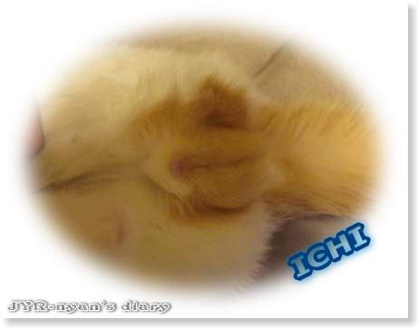 ichi110414