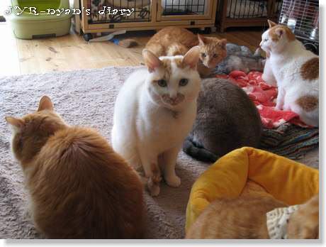 sasuke120329