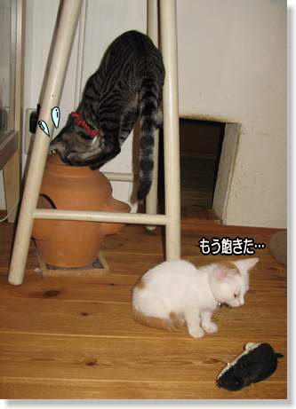 taichibi1109032